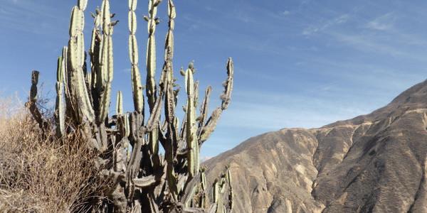 Peru – Cañón del Colca